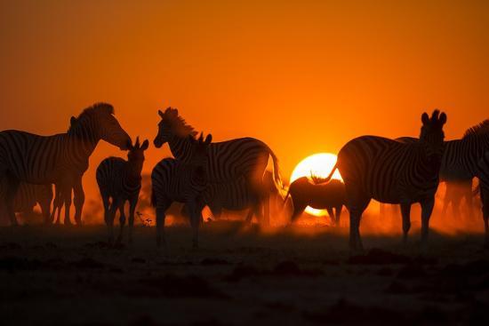 paul-souders-plains-zebra-makgadikgadi-pans-national-park-botswana
