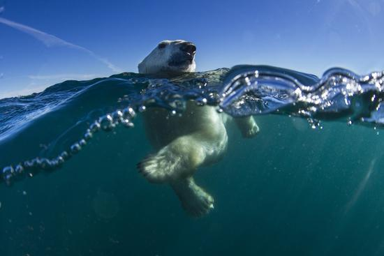 paul-souders-polar-bear-hudson-bay-nunavut-canada
