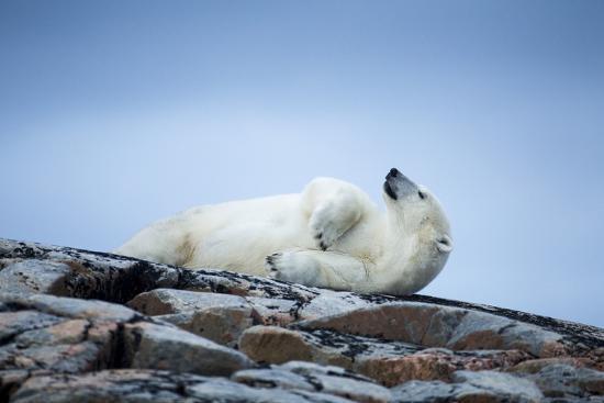 paul-souders-polar-bear-on-harbour-islands-hudson-bay-nunavut-canada