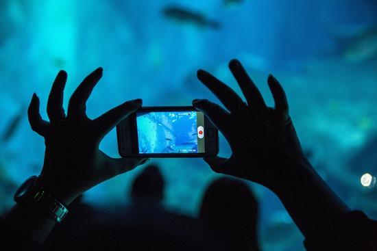 paul-souders-tourists-at-s-e-a-aquarium-singapore