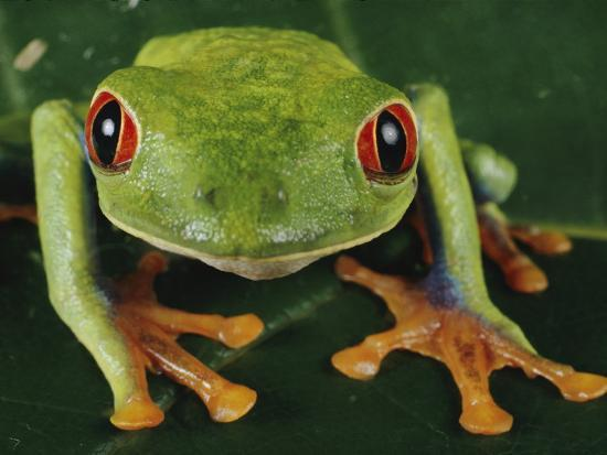paul-zahl-close-up-of-a-tree-frog
