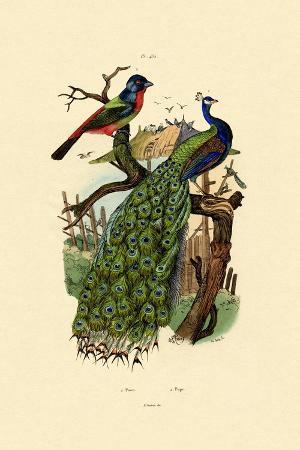 peacock-1833-39