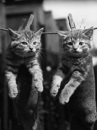 pegged-kittens