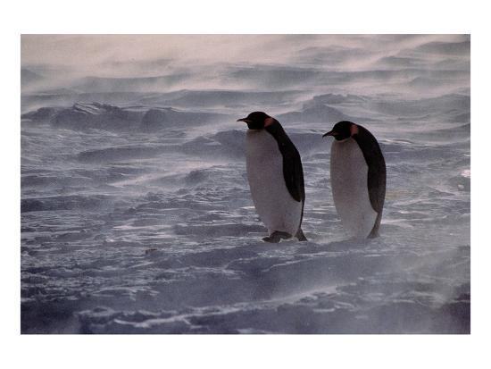 penguins-waiting-out-the-storm