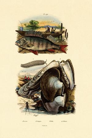 perch-1833-39