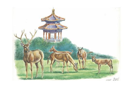 pere-davids-deer-elaphurus-davidianus-grazing