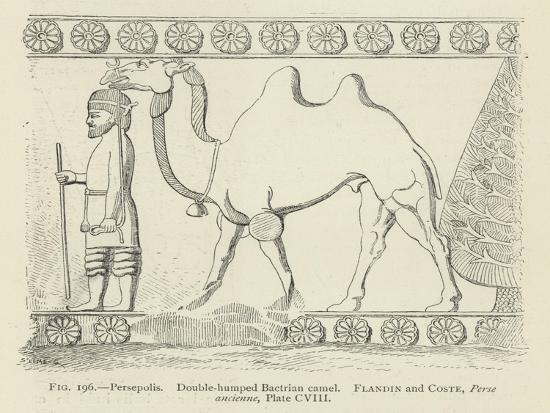 persepolis-double-humped-bactrian-camel