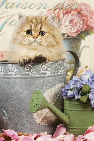 persian-kitten-in-flowerpot
