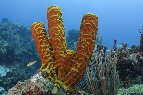 pete-oxford-convoluted-barrel-sponge-hol-chan-marine-reserve-belize