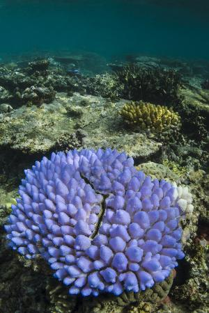 pete-oxford-coral-reef-diversity-fiji