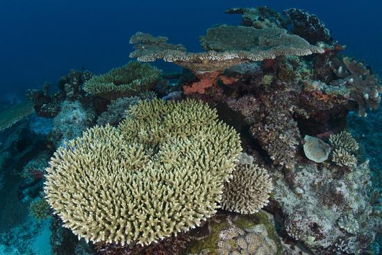 pete-oxford-coral-reef-diversity-rainbow-reef-fiji