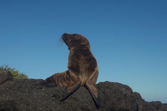 pete-oxford-galapagos-sea-lion-pup-galapagos-ecuador