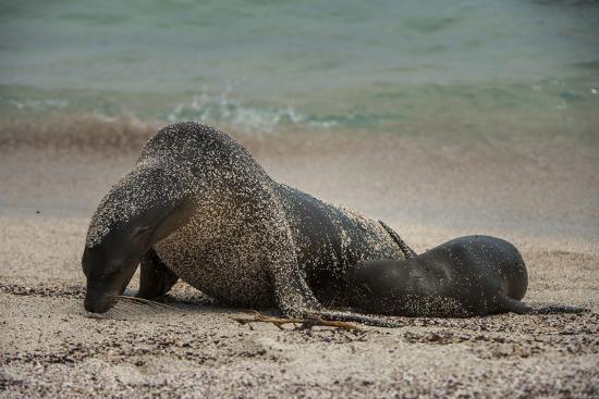 pete-oxford-galapagos-sea-lions-gardner-bay-hood-island-galapagos-ecuador
