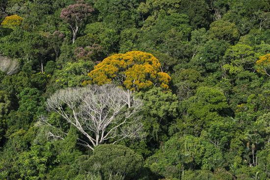 pete-oxford-rainforest-canopy-kupinang-region-guyana