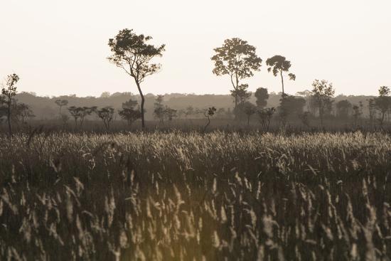 pete-oxford-savanna-rupununi-guyana