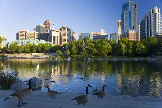 peter-adams-canada-geese-resting-at-a-lake-with-skyline-calgary-alberta-canada