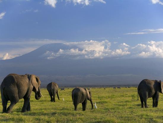 peter-adams-elephant-mt-kilimanjaro-masai-mara-national-park-kenya