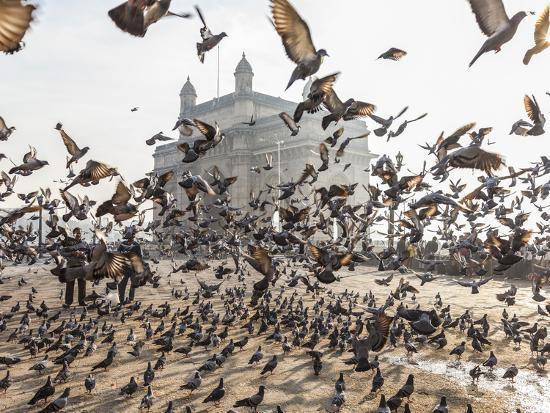 peter-adams-pigeons-india-gate-colaba-mumbai-bombay-india