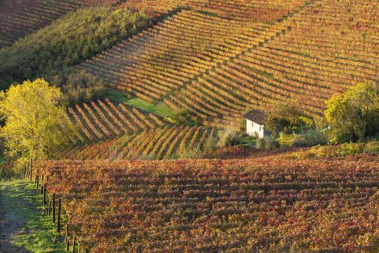 peter-adams-vineyards-near-alba-langhe-piedmont-italy