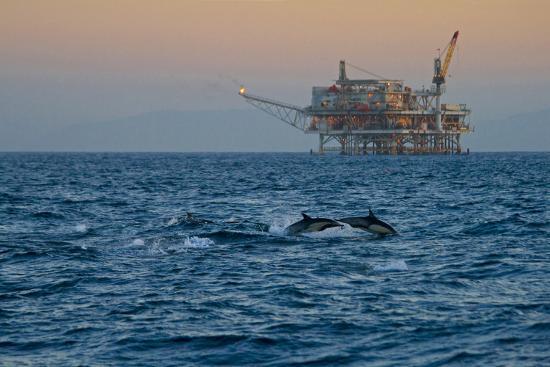 peter-bennett-dolphin-pod-leap-near-oil-derrick-catalina-channel-california-usa