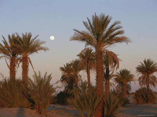 peter-carsten-framed-by-palm-trees-the-moon-rises-over-the-sahara-desert