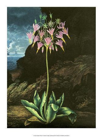 peter-charles-henderson-botanical-print-the-american-cowslip