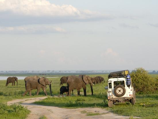 peter-groenendijk-group-of-elephants-and-landrover-chobe-national-park-botswana-africa
