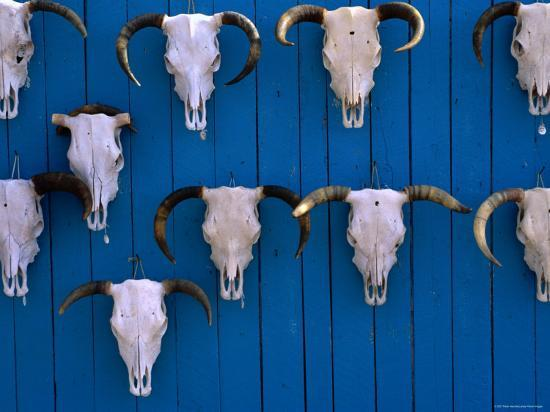 peter-hendrie-animal-skulls-on-wall-new-mexico