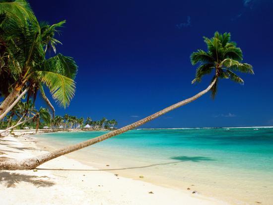 peter-hendrie-palm-trees-leaning-towards-sea-at-matautu-beach-matautu-a-ana-upolu-samoa