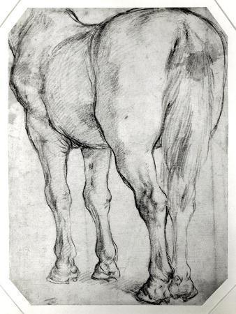 peter-paul-rubens-horse-s-rear