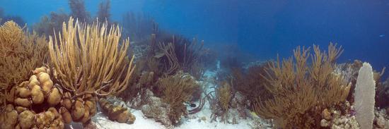peter-scoones-coral-reef