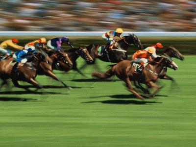 Thoroughbred race in action photographic print by peter for Thoroughbred tattoo lookup