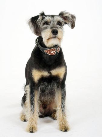 petra-wegner-mixed-breed-dog-sitting-down-one-ear-raised