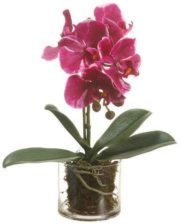 phalaenopsis-orchid-pink
