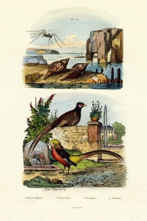pheasant-1833-39