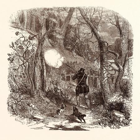 pheasant-shooting-in-october