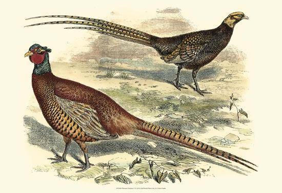 pheasant-varieties-v