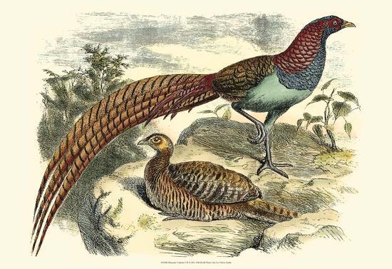 pheasant-varieties-vii
