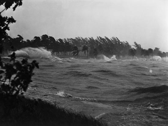 philip-gendreau-rough-water-and-blowing-palm-trees