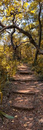 philippe-hugonnard-awesome-south-africa-collection-panoramic-african-forest-fall-colors-ii