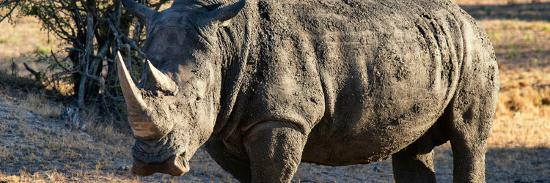 philippe-hugonnard-awesome-south-africa-collection-panoramic-black-rhino-at-sunset