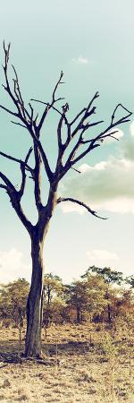 philippe-hugonnard-awesome-south-africa-collection-panoramic-dead-tree-in-the-savannah-ii