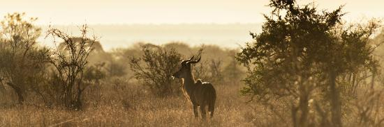 philippe-hugonnard-awesome-south-africa-collection-panoramic-impala-sunrise