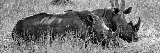 philippe-hugonnard-awesome-south-africa-collection-panoramic-two-white-rhinos-iii