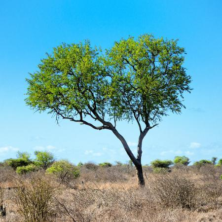 philippe-hugonnard-awesome-south-africa-collection-square-green-tree-heart