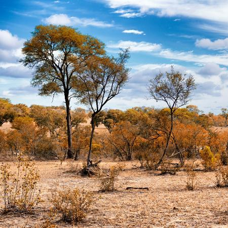 philippe-hugonnard-awesome-south-africa-collection-square-savanna-landscape-in-fall-colors-iii