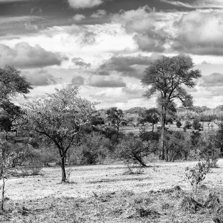 philippe-hugonnard-awesome-south-africa-collection-square-savanna-landscape-iv-b-w