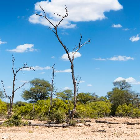 philippe-hugonnard-awesome-south-africa-collection-square-savannah-landscape-iv