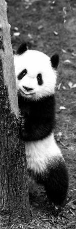 philippe-hugonnard-china-10mkm2-collection-giant-panda-baby