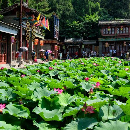 philippe-hugonnard-china-10mkm2-collection-lotus-flowers